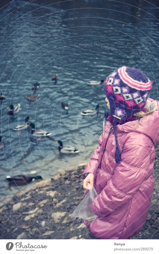 Feed the ducks Feminine Child Girl 1 Human being 3 - 8 years Infancy Lake Cap Water Feeding Blue Violet Pink Duck Duck pond Bread Leisure and hobbies