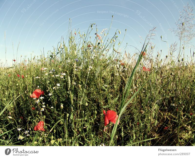 Sky Nature Vacation & Travel Summer Plant Flower Animal Landscape Environment Meadow Grass Natural Park Field Climate Beautiful weather