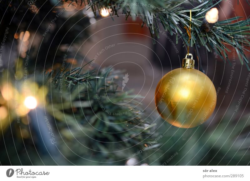 Christmas & Advent Green Joy Emotions Happy Feasts & Celebrations Moody Together Gold Glittering Contentment Happiness Illuminate Plastic Kitsch Christmas tree