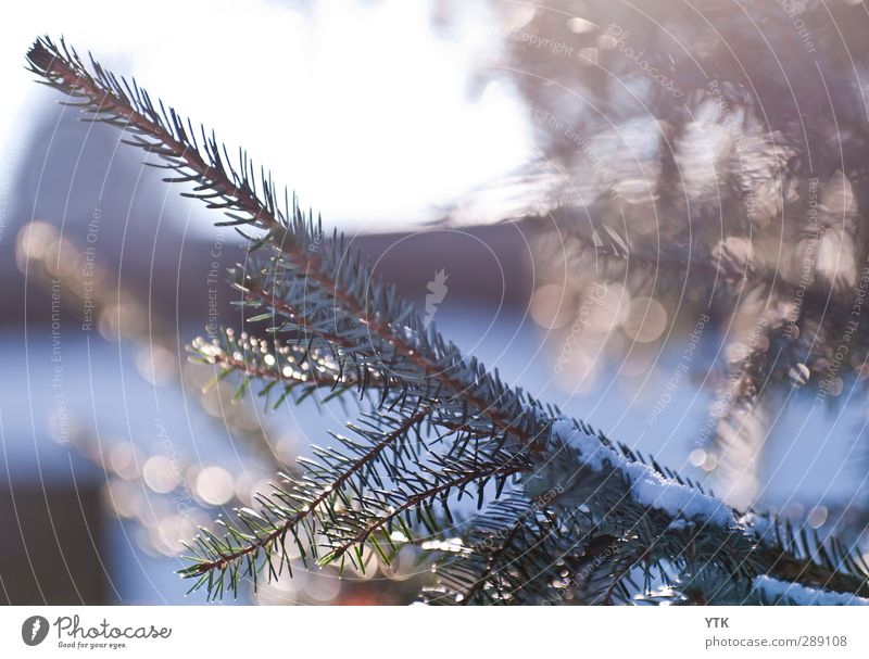 Winter's Day Environment Nature Plant Elements Air Water Sky Sunlight Climate Climate change Weather Beautiful weather Ice Frost Snow Tree Foliage plant Forest
