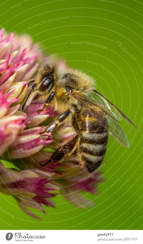 bee Trip Expedition Environment Nature Spring Summer Plant Flower Blossom Wild plant Garden Park Meadow Animal Farm animal Wild animal Bee Animal face Wing Pelt