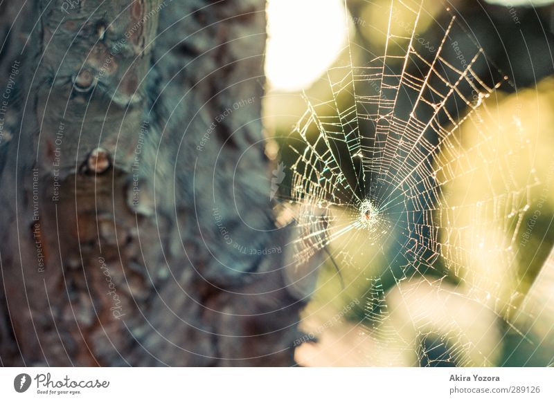 Architecture in the animal kingdom Tree bark Nature Spider Net Green Yellow White Brown