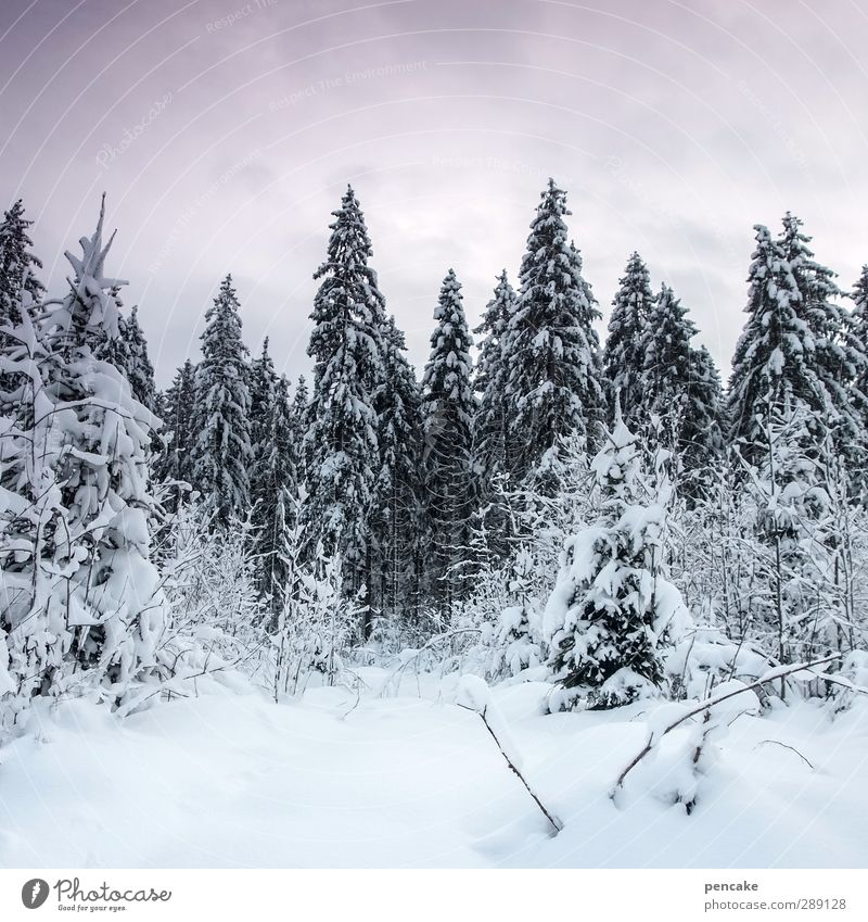 Sky Nature Beautiful White Landscape Calm Winter Forest Cold Snow Healthy Bright Ice Climate Authentic Hiking