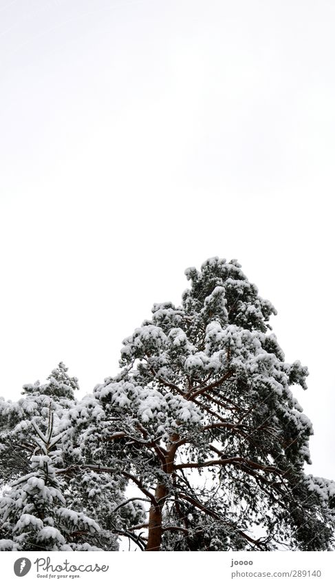Sky Tree Clouds Forest Cold Snow Gray Large Bad weather