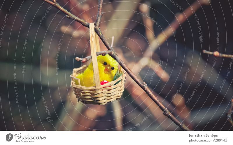 Nature Beautiful Joy Funny Happy Small Happiness Cute Gift Branch Search Easter Twig Find Nest Chick