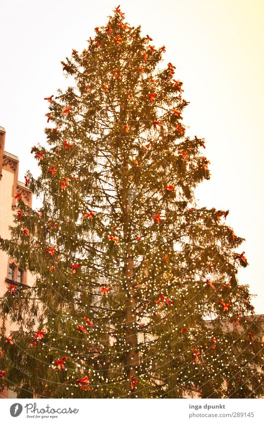 wait... Tree Coniferous trees Christmas tree Glitter Ball Christmas tree decorations Christmas Fair Christmas & Advent Joy Joie de vivre (Vitality) Anticipation