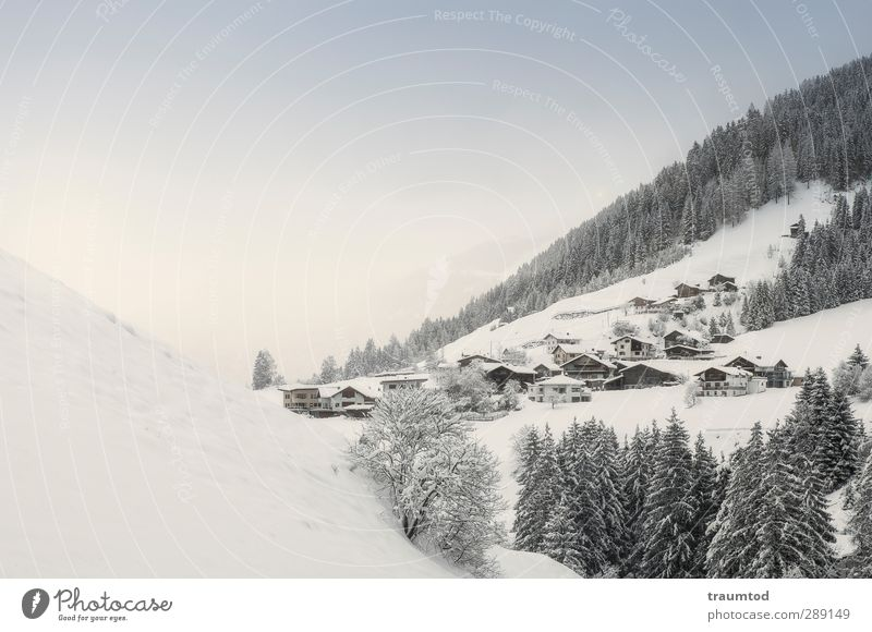 Vacation & Travel Winter Landscape Forest Far-off places Mountain Cold Snow Freedom Hiking Beautiful weather Alps Hill Cloudless sky Winter vacation