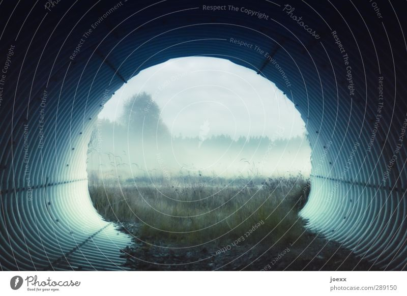 uncharted territory Landscape Autumn Fog Meadow Deserted Tunnel Cold Blue Gray Green Black Calm Hope Idyll Target Corrugated iron wall Passage Pipe Colour photo