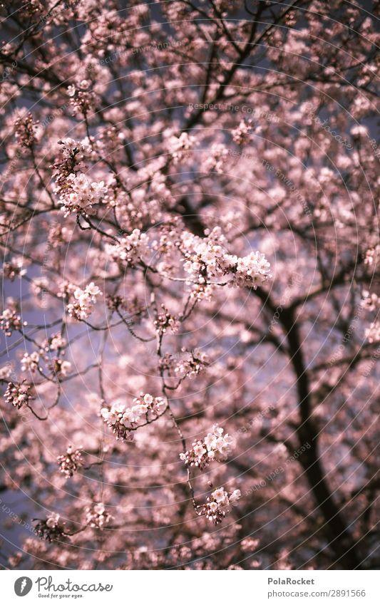 #A# Cherry awakening Art Work of art Esthetic Cherry blossom Spring Spring fever Spring day Spring colours Spring celebration Cherry tree Japan Colour photo