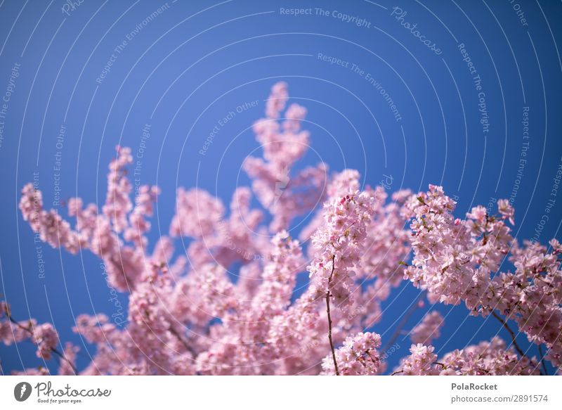 #A# Pink Spring Environment Nature Landscape Plant Esthetic Spring fever Spring day Spring colours Spring celebration Blossoming Green pastures Cherry blossom