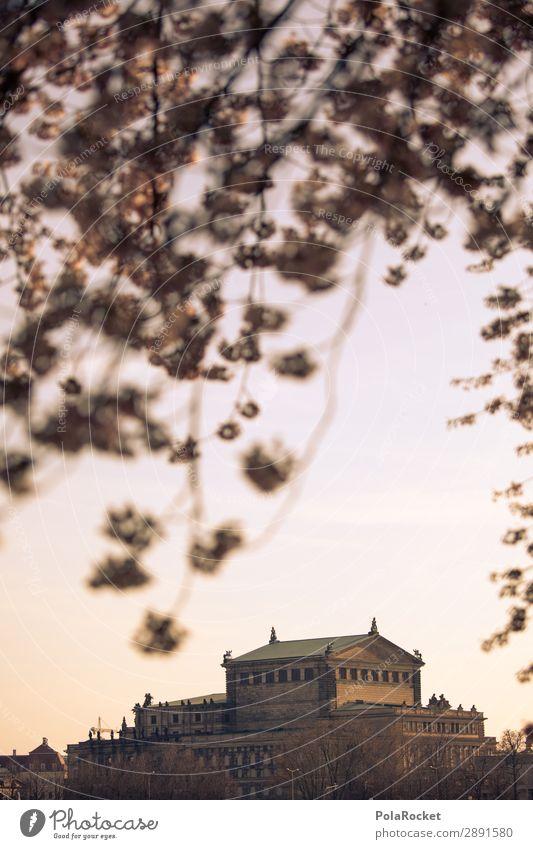 #A# Dresden Flower II Art Esthetic Semper Opera Blossoming Green pastures Elbufer Cherry blossom Colour photo Subdued colour Exterior shot Detail Deserted