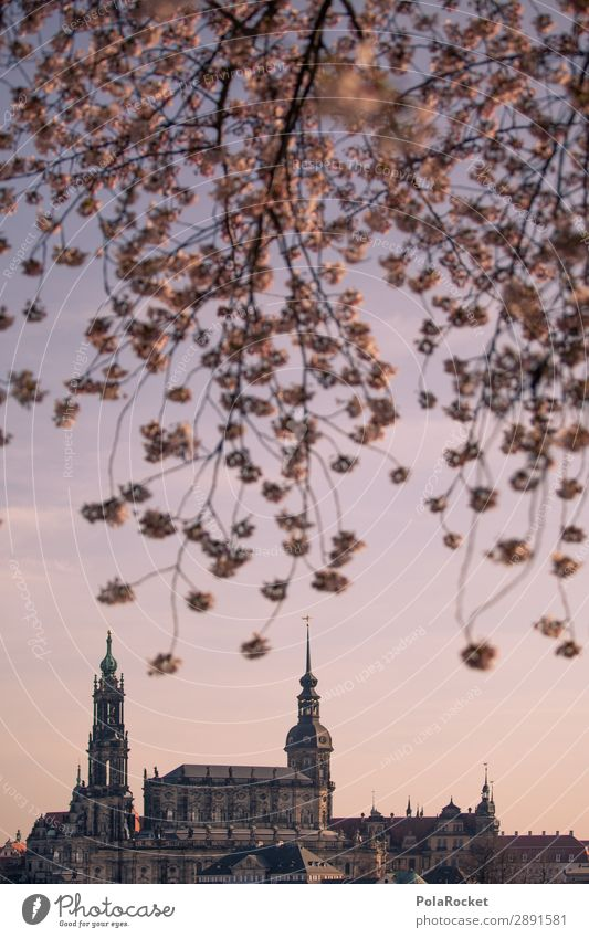#A# Dresden Spring IV Art Esthetic Saxony Spring fever Spring day Cherry blossom Romance Idyll Germany Tourist Attraction Colour photo Subdued colour