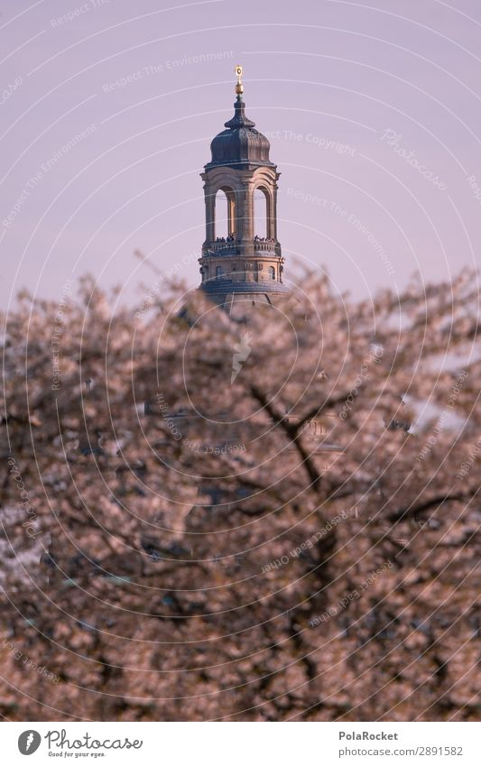 #A# Big Sister Environment Nature Landscape Esthetic Frauenkirche Dresden Domed roof Tower Building Part of a building Cherry blossom Spring Spring fever