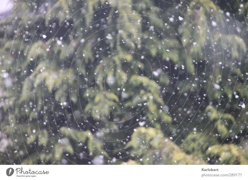 The snow trickles quietly Vacation & Travel Tourism Trip Adventure Far-off places Winter Snow Winter vacation Agriculture Forestry Environment Nature Climate