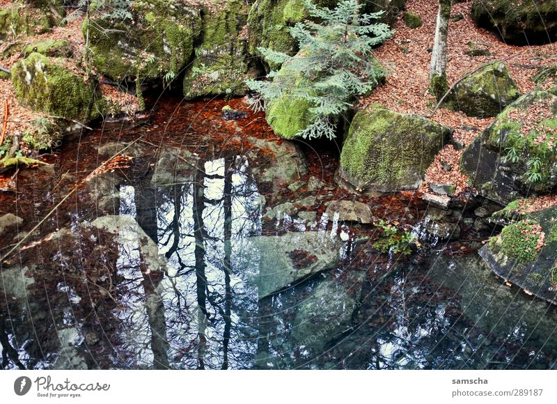 The mirror in the forest Hiking Environment Nature Landscape Plant Elements Earth Water Autumn Forest Rock Lakeside Pond Fluid Cold Wet Natural Wild Adventure