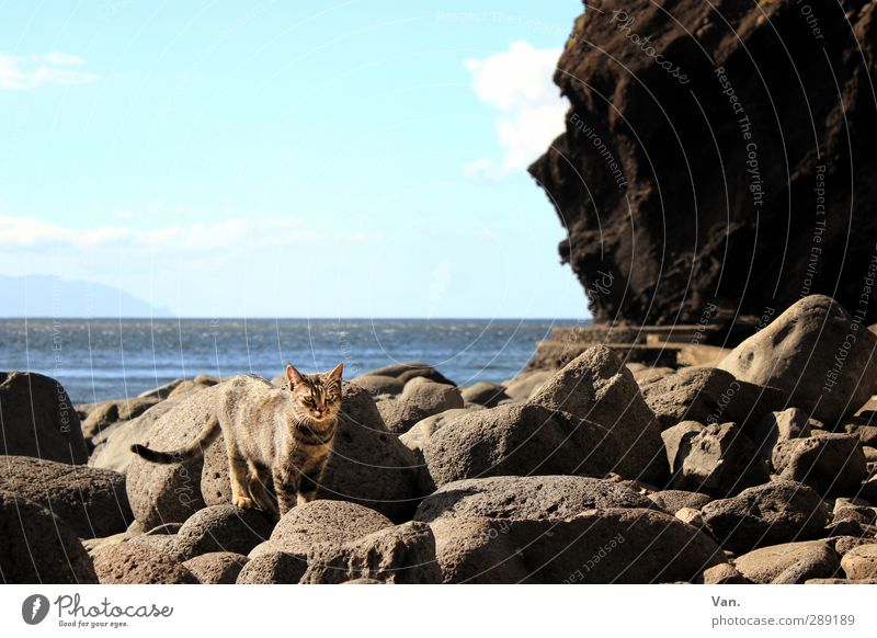 beach chick Vacation & Travel Nature Landscape Water Sky Horizon Rock Coast Bay Ocean Atlantic Ocean Animal Pet Cat 1 Stone Blue Gray Colour photo Multicoloured