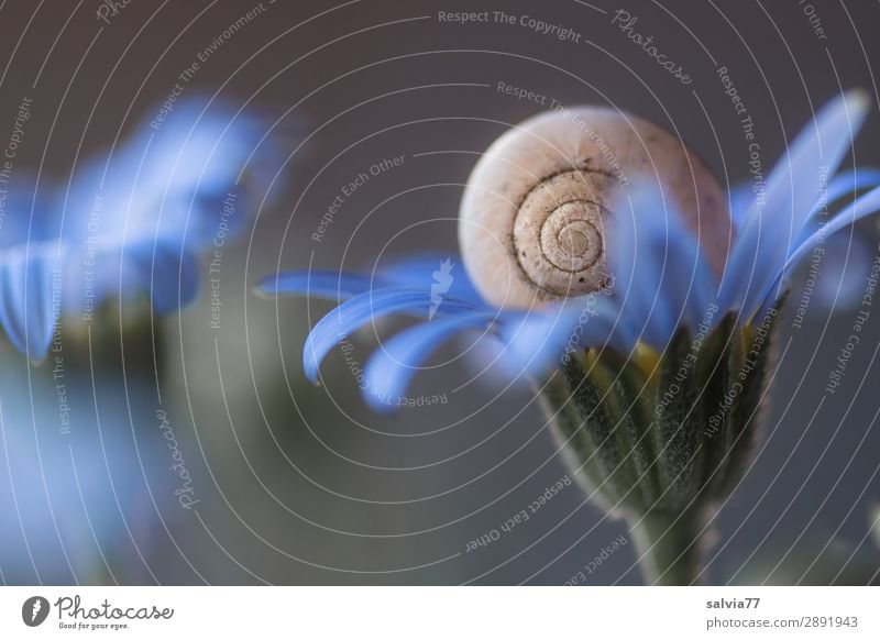 Delicate Blue Environment Nature Plant Flower Blossom Garden Animal Snail 1 Blossoming Above Round Soft Gray Fragrance Calm Protection Structures and shapes