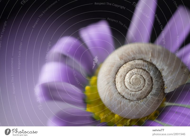 purple Environment Nature Spring Summer Flower Blossom Garden Animal Snail Snail shell 1 Esthetic Above Positive Round Beautiful Violet Protection Spiral