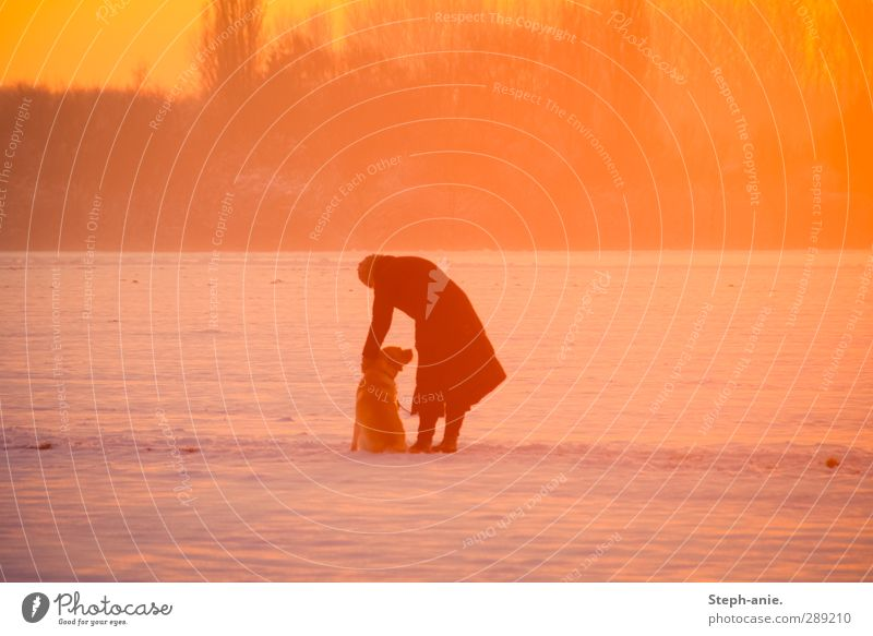 . Human being Woman Adults 1 Landscape Sunrise Sunset Sunlight Winter Beautiful weather Snow Meadow Field Coat Dog Animal Touch Illuminate Friendliness Cute