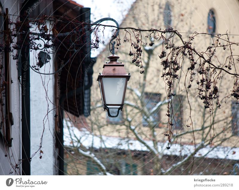 Old Plant Calm House (Residential Structure) Cold Wall (building) Street Wall (barrier) Lighting Natural Exceptional Historic Trust Lantern Hang Downtown