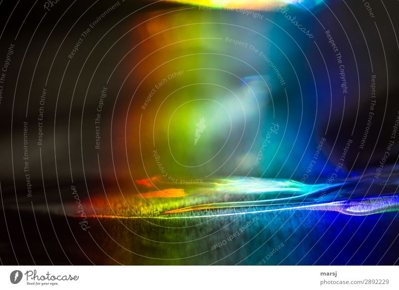 Coloured Prismatic colors Headstrong Undulating Exceptional Dark Crazy Multicoloured Whimsical Colour photo Exterior shot Close-up Macro (Extreme close-up)