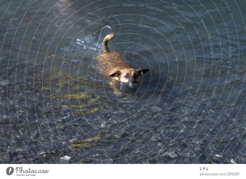 Dog Nature Water Animal Environment Mountain Feminine Movement Funny Lake Swimming & Bathing Natural Authentic Hiking Wet Adventure