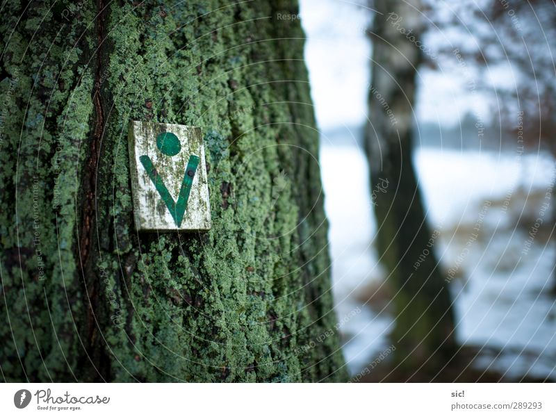 tree symbol Hunting Hiking Agriculture Forestry Nature Winter Snow Tree wendland Lanes & trails Sign Signs and labeling Green White Sustainability Tree felling