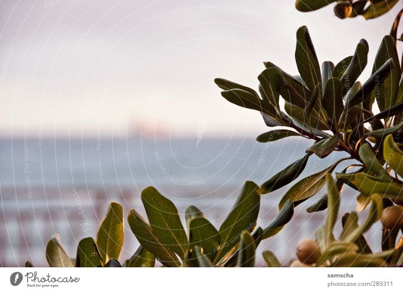 Sky Nature Green Water Plant Ocean Leaf Clouds Landscape Environment Coast Park Wild Bushes Observe Industry