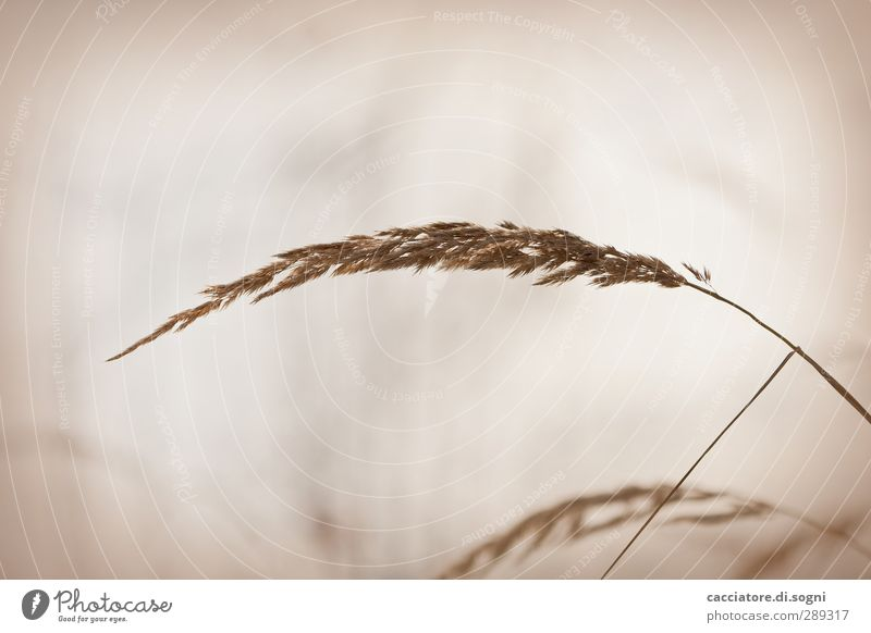 soft Nature Plant Autumn Grass Meadow Athletic Simple Cuddly Long Near Natural Positive Beautiful Dry Brown Moody Joie de vivre (Vitality) Passion