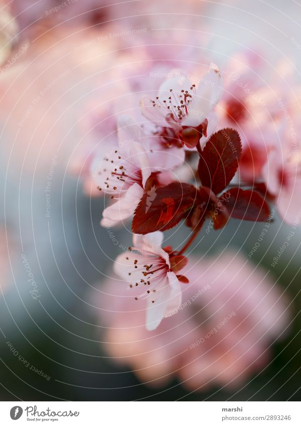 Nature Plant Flower Blossom Spring Pink Jump Blossoming Delicate Blossom leave Spring fever Flower necklace