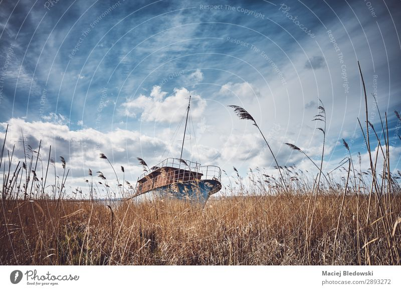 Retro toned picture of a shipwreck in the reeds Vacation & Travel Adventure Expedition Beach Island Financial institution Nature Landscape Sky Grass Meadow