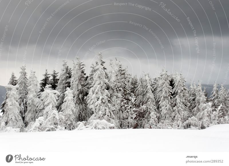 gloomy times Trip Adventure Winter Snow Winter vacation Nature Landscape Elements Sky Storm clouds Climate Climate change Sign Dark Cold Moody Colour photo