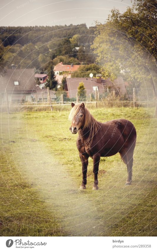 On site - Horse Meadow Pasture Village 1 Animal Stand Esthetic Friendliness Original Calm Boredom Serene Nature Wire netting fence Colour photo Exterior shot