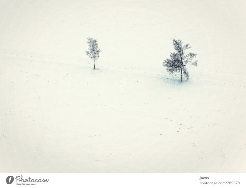 RENEWS Landscape Winter Ice Frost Snow Tree Field Bright Cold Yellow Black White Relationship Idyll Environment Lanes & trails Colour photo Subdued colour