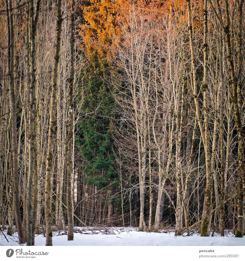 winter solstice Nature Landscape Winter Snow Tree Forest Emotions Fatigue Longing Idyll Winter solstice remaining light Last round Orange Green End New start