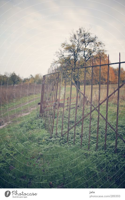 demarcation Environment Nature Landscape Plant Sky Autumn Tree Grass Meadow Field Fence Natural Colour photo Exterior shot Deserted Day
