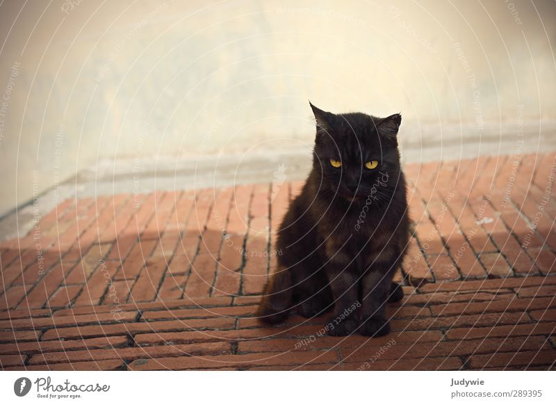 Cat Summer Animal Calm Black Wall (building) Wall (barrier) Brown Natural Contentment Elegant Wait Italy Curiosity Animal face Village