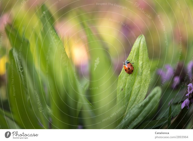 Off to springtime Nature Plant Animal Spring Flower Grass Leaf Blossom Wild plant weed Meadow Wild animal Beetle Ladybird 1 Crawl Beautiful Small Life