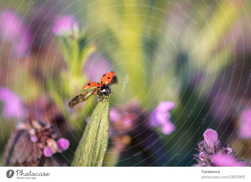 Nature Plant Beautiful Green Flower Animal Leaf Environment Blossom Meadow Grass Small Garden Orange Pink Flying