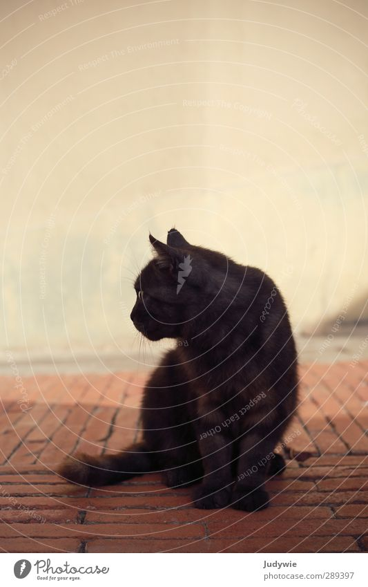 Cat Summer Animal Calm Black Relaxation Wall (building) Wall (barrier) Brown Natural Facade Sit Wait Esthetic Soft Italy