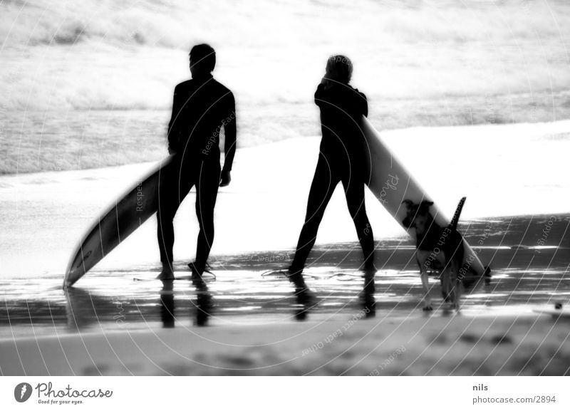 Water Ocean Beach Sports Dog Waves Vantage point Observe Surfing Surfboard Coast Infrared Passenger train