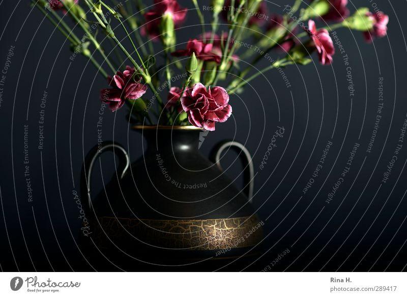 Cut Carnation II for Mrs. L. Style Flower Dianthus Vase Blossoming Gold Red Black Still Life Bouquet Average Decoration Carry handle Interior shot Studio shot