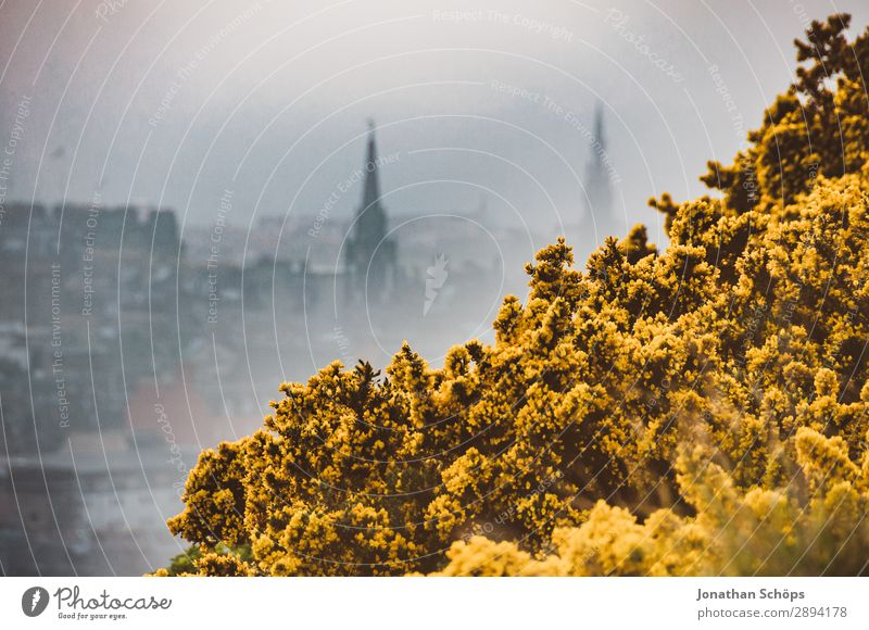 View to Edinburgh in the fog over gorse Vacation & Travel Freedom Hiking Environment Nature Landscape Plant Spring Bushes Esthetic Arthur's Seat Great Britain