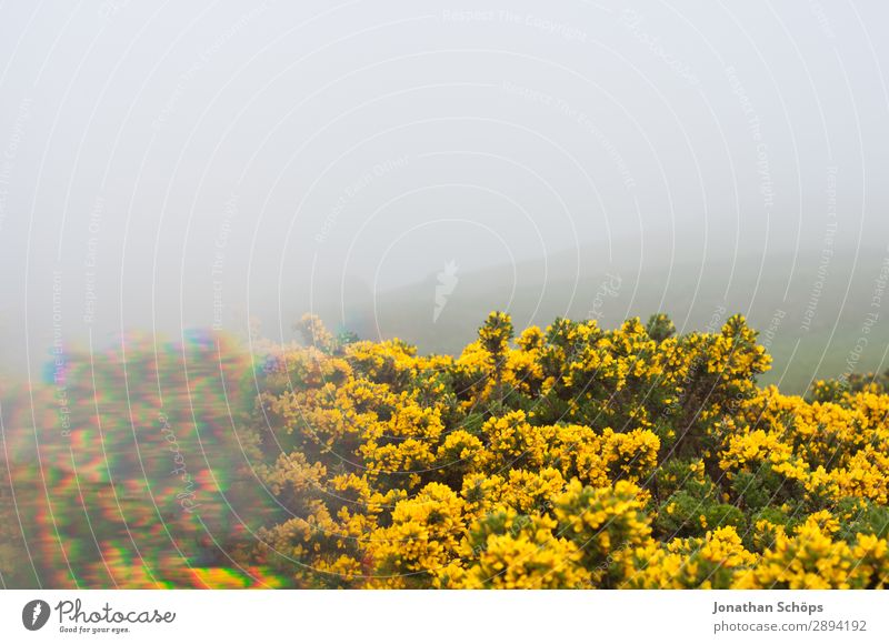Vacation & Travel Nature Plant Landscape Flower Yellow Environment Spring Hiking Fog Esthetic Bushes Scotland Great Britain Thorn Prism