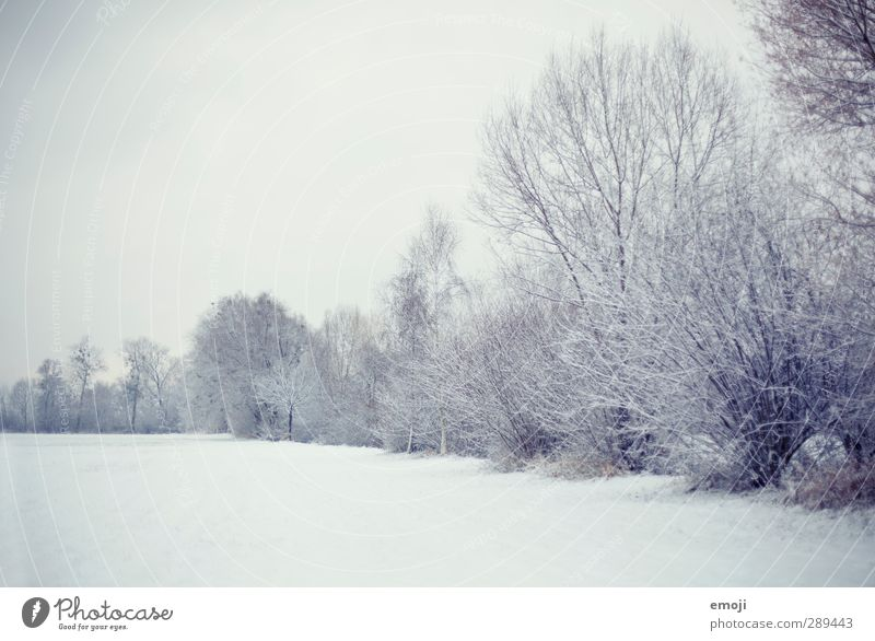 winter Environment Nature Landscape Sky Winter Snow Tree Bushes Field Bright Cold White Colour photo Subdued colour Exterior shot Deserted Copy Space top