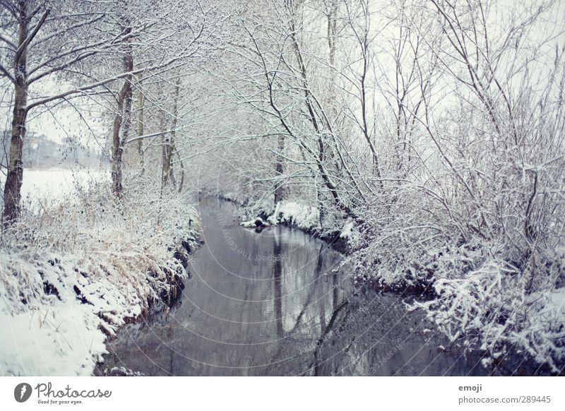 winter Environment Nature Landscape Water Winter Snow Tree Bushes Forest River bank Brook Bright Cold White Colour photo Subdued colour Exterior shot Deserted