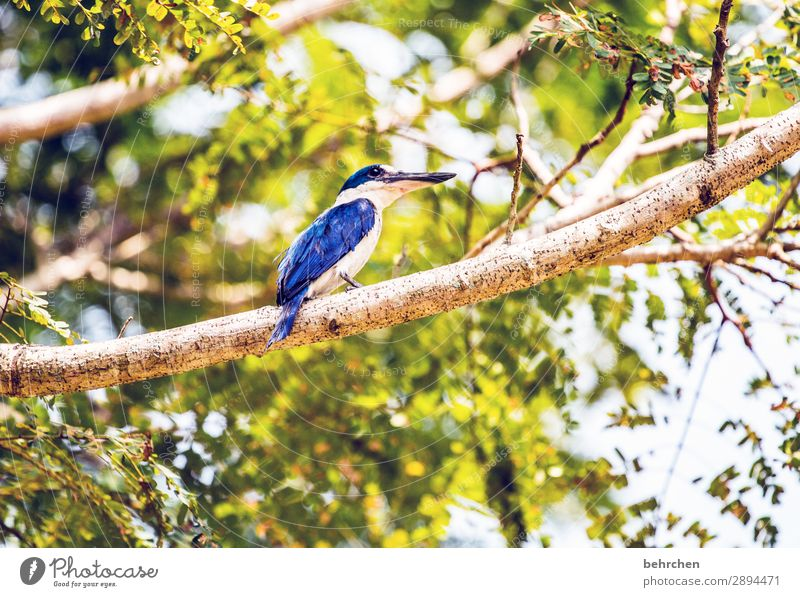 high up Vacation & Travel Tourism Trip Adventure Far-off places Freedom Plant Tree Bushes Leaf Virgin forest Wild animal Bird Wing Kingfisher Beak Feather