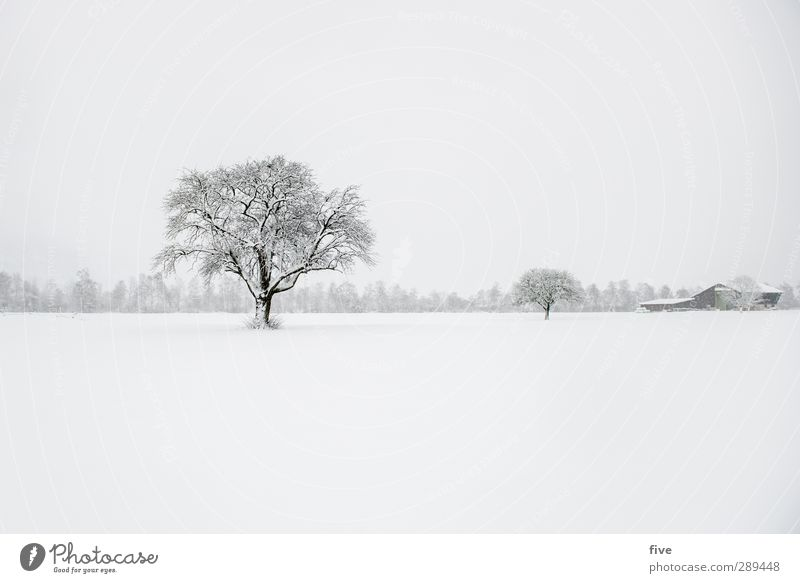 winter Nature Clouds Winter Bad weather Gale Snow Snowfall Cold Colour photo
