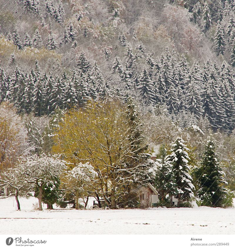 Nature Green White Plant Tree Loneliness Winter Calm Landscape Forest Yellow Mountain Cold Snow Wood Contentment