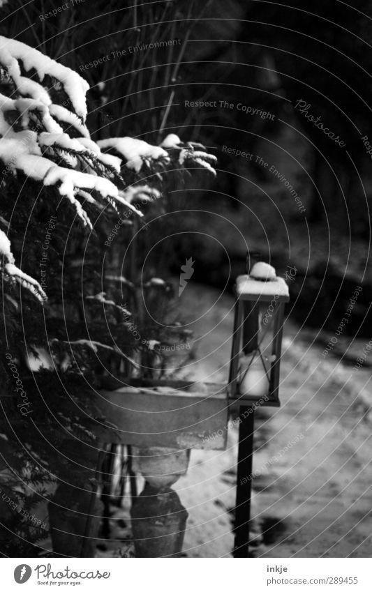 winter Winter Snow Bushes Coniferous trees Garden Park Deserted Lanes & trails Dark Lantern Candle Black & white photo Exterior shot Detail Day Evening Twilight
